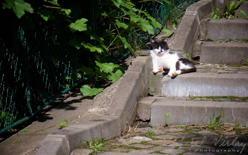 Sinaia: Pisica tolanind pe trepe sub soarele de iunie!