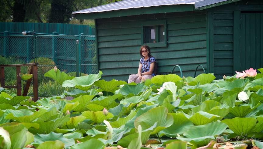 01-Lacul-Snagov-doamna-intre-lotusi_Foto-Aurel-Virlan