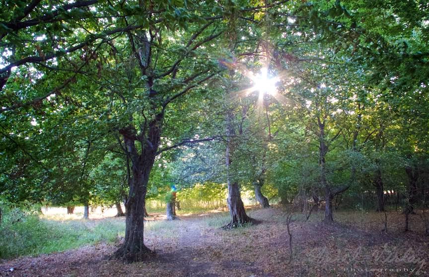 Padurea verde cu soare in copaci.