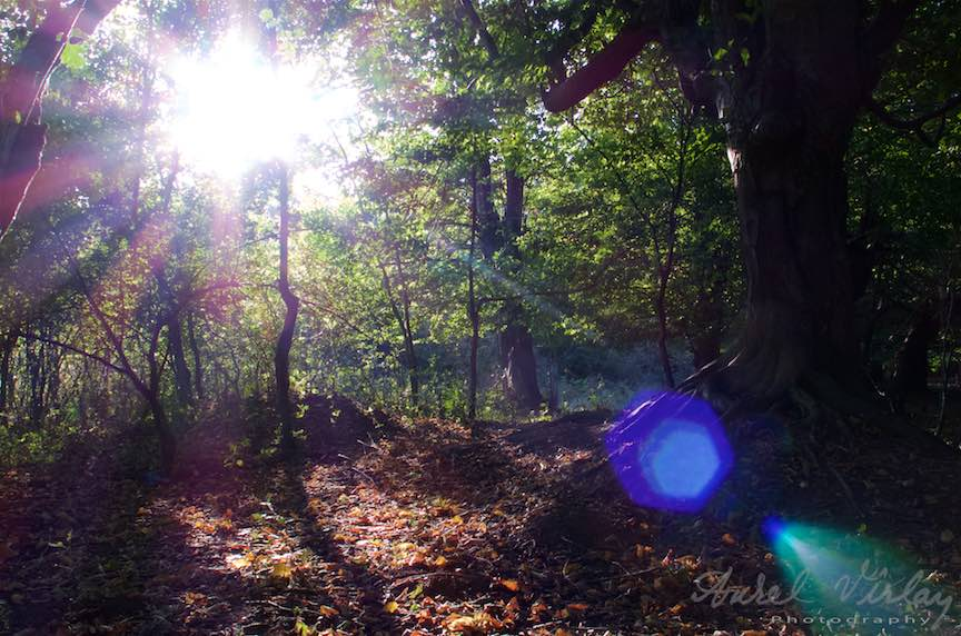 Flare-lens sau jocul razelor de soare prin lentilele obiectivului foto.
