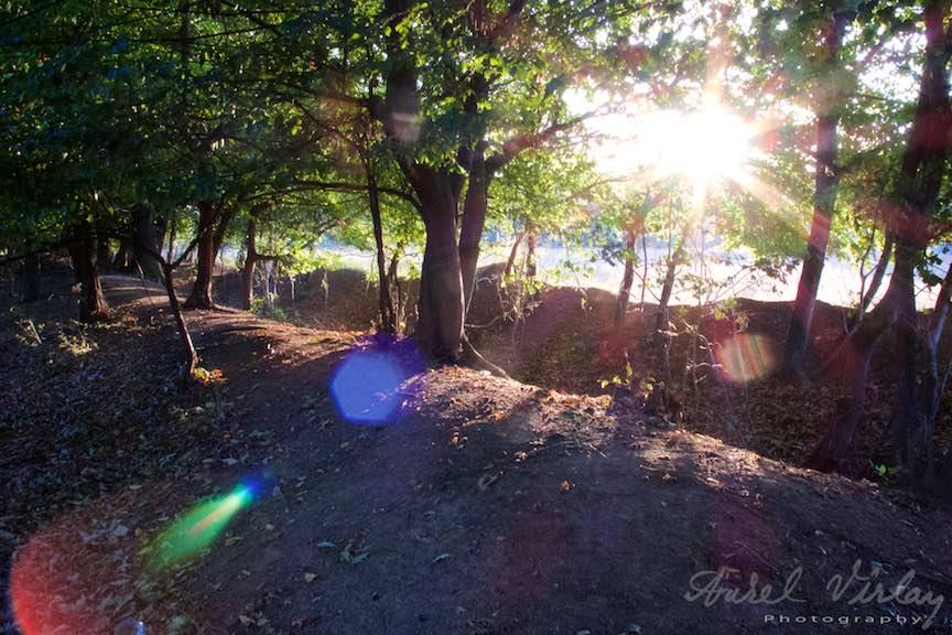 Printre copaci se vede un luminis insorit.