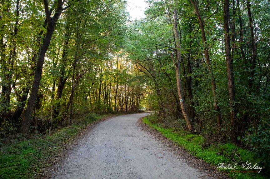 Parcul Natural Comana. Drum prin padure, Toamna.