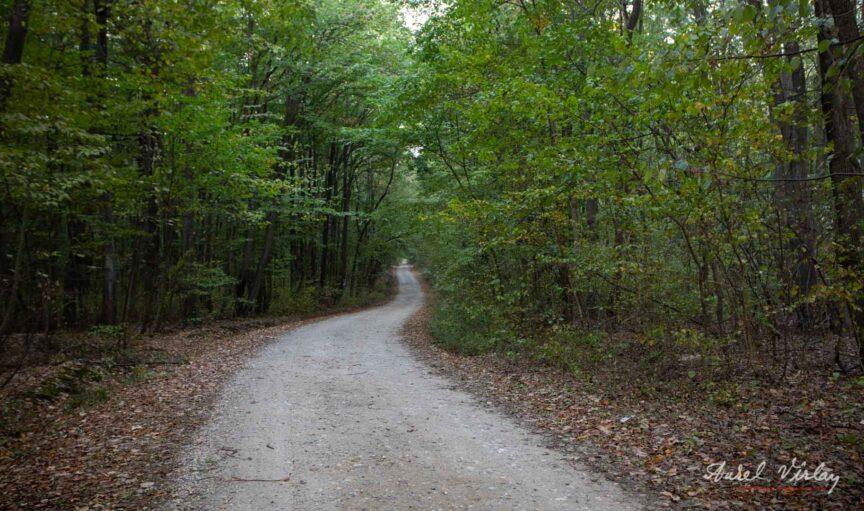 Drumul serpuieste hipnotic prin padurea inca verde, asa ca mergem mai departe.