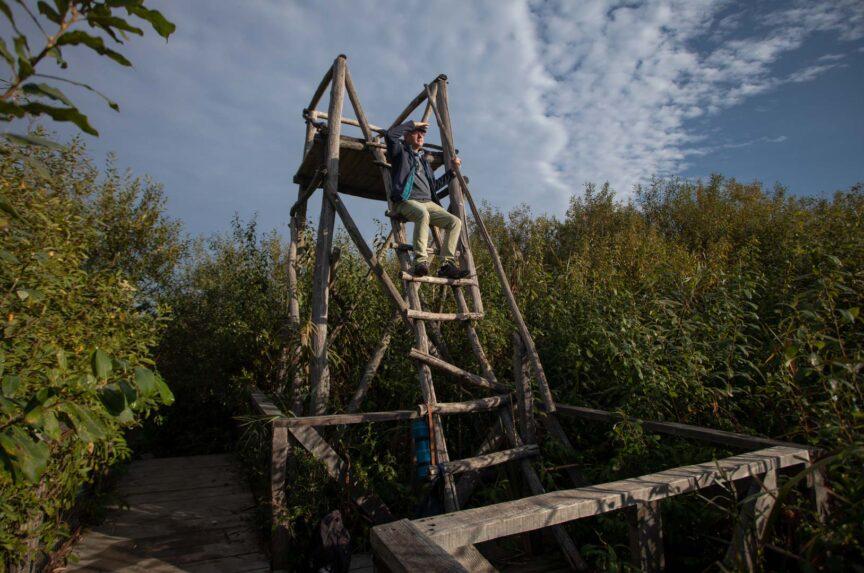 Capat de drum (astazi) pentru un fotograf. Observatorul Ornitologic  din Parcul Natural Comana. A nu se rata!
