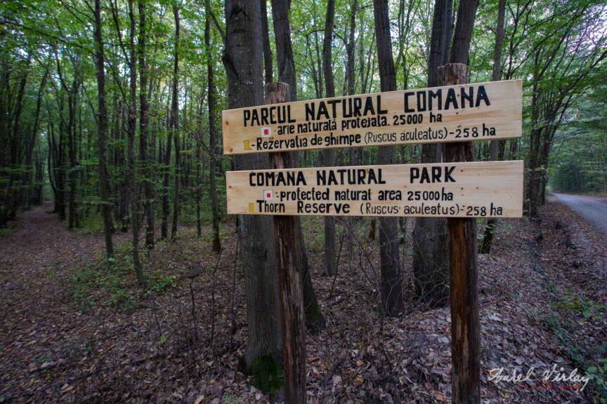 Rezervatia de ghimpe din Parcul Natural Comana.