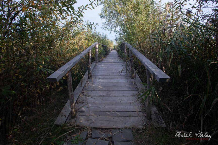 Podetul de lemn ce duce la Observatorul Ornitologic.