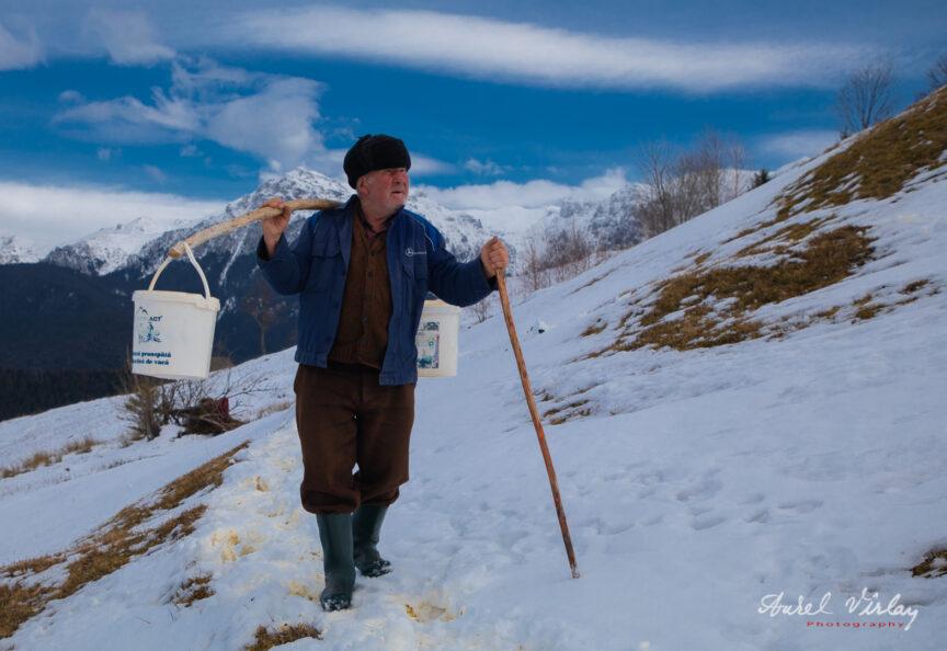 Bătrân cioban cărând apa cu cobilita sus pe munte.